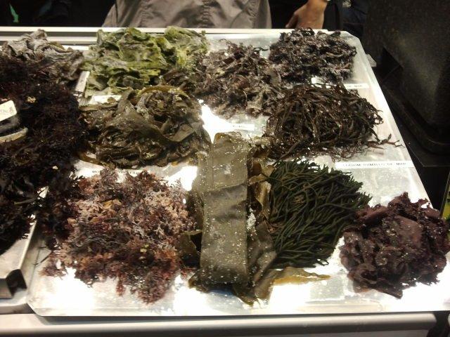 algas marinas para cocinar